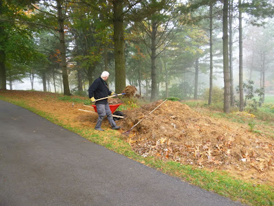 Culham uses garden fork to move large pile of pine needles into wheelbarrow .