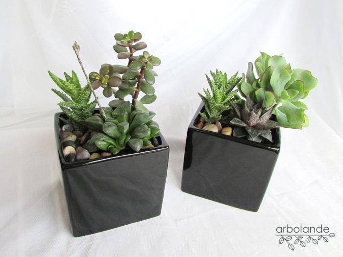 Planta exterior resistente cool planta exterior flores - Planta exterior resistente ...