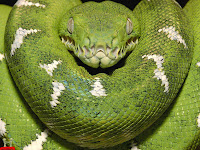 Snakes Picture and Photo 20