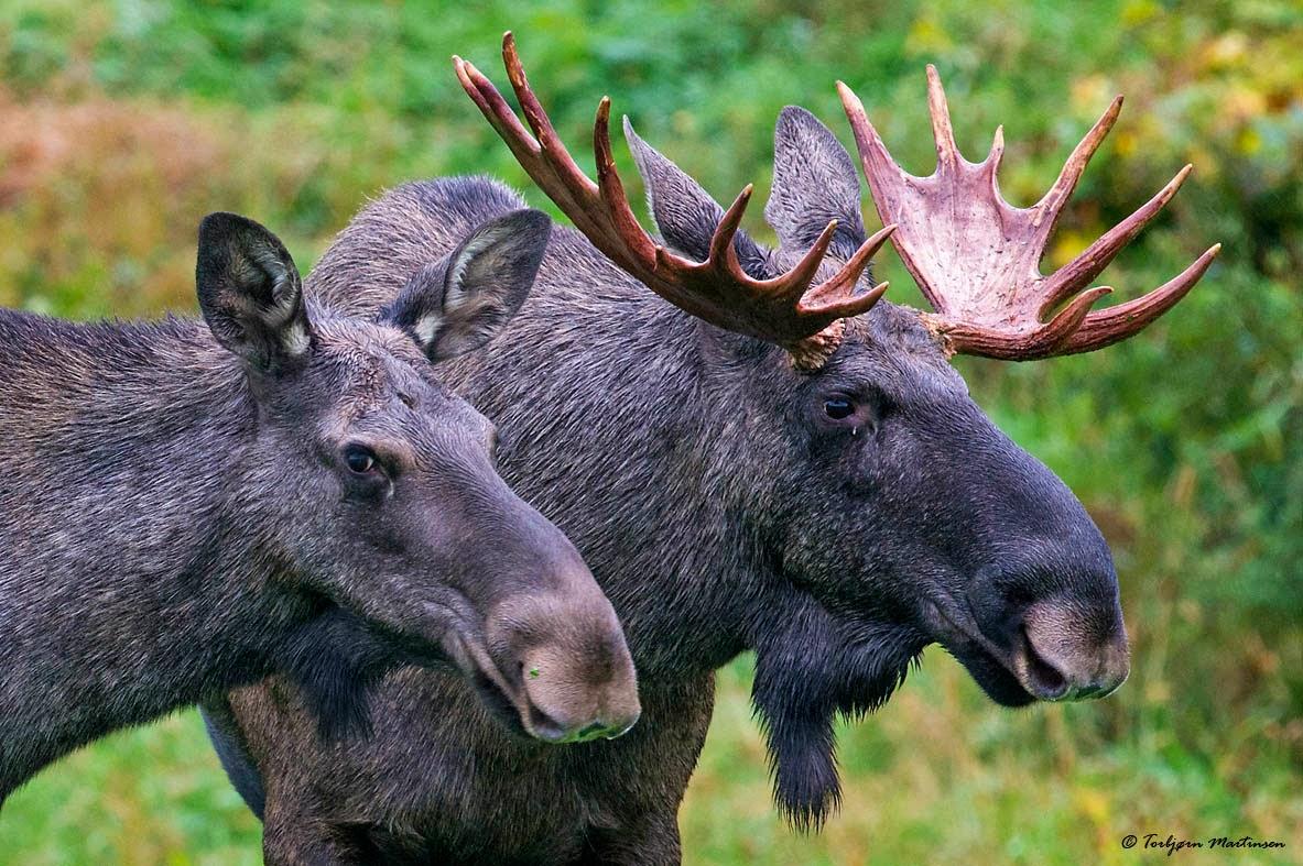 elg sammen mrd