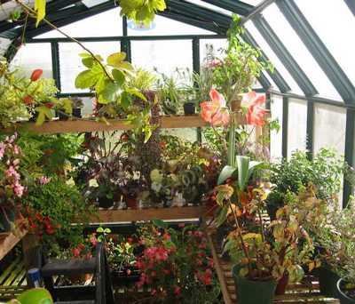 Desarrollo sustentable invernadero for Invernaderos para jardin