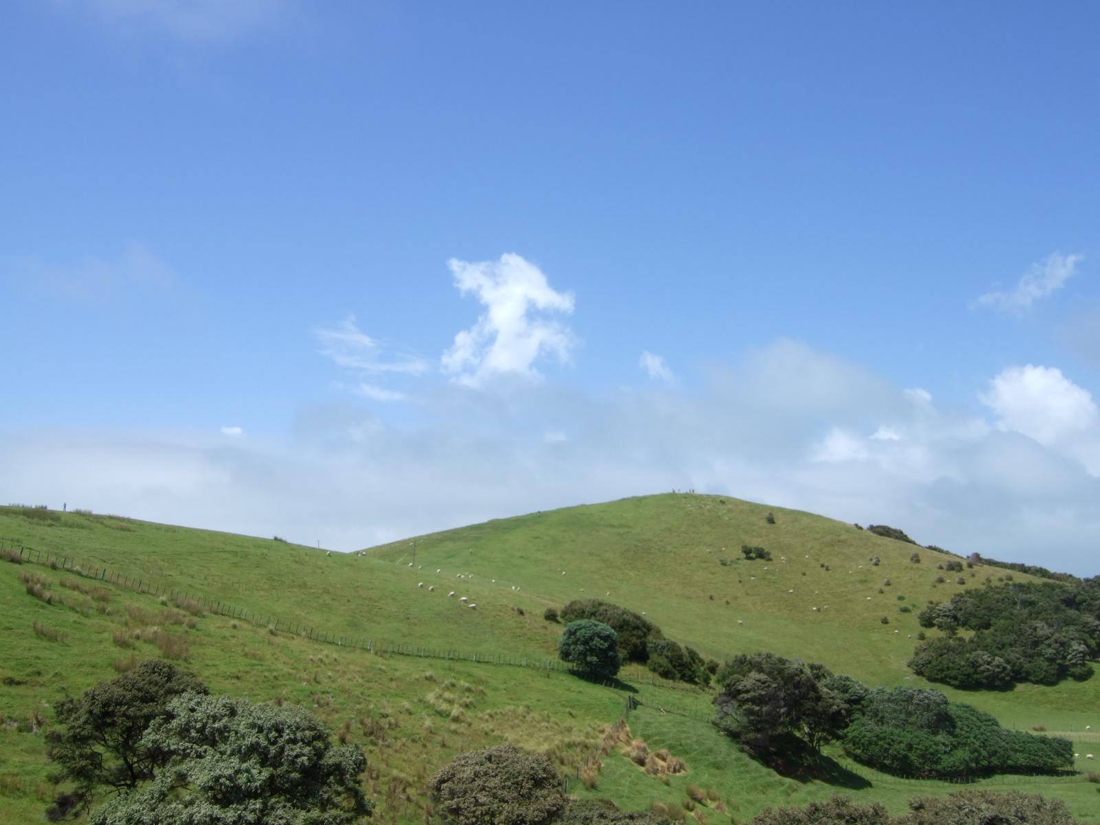 ウルプカプカ島,山,草原,樹木,放牧,NZ〈著作権フリー無料画像〉Free Stock Photos
