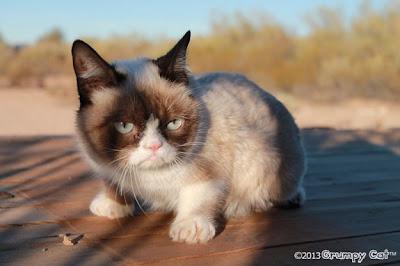 Foto-foto Grumpy cat 05