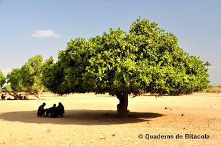 pueblo arbore