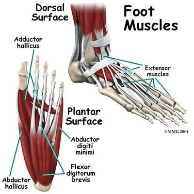 foot-muscles.jpg