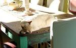 El gato más fotogenico del mundo