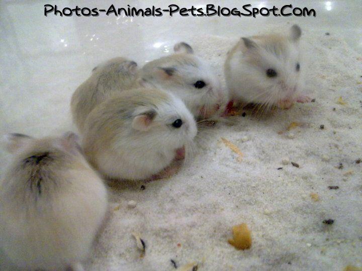 http://4.bp.blogspot.com/-UGno_WR0MhU/Tb1kFOecz3I/AAAAAAAAA5k/Xc8BbOdIAcM/s1600/hamster%2Bcute_0001.jpg