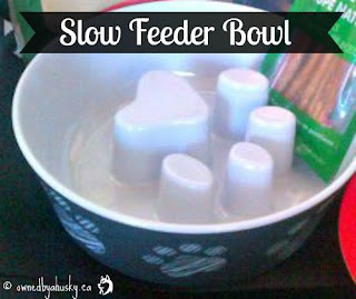 slow feeder bowl
