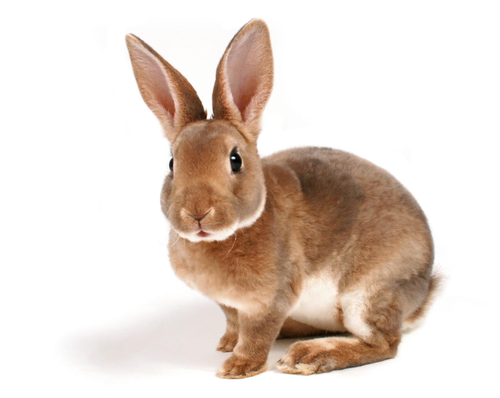 piruja significado mexico caras de conejos