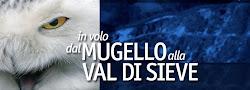 Video Museo & Villa Poggio Reale