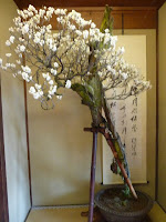 第1回から展示、樹齢250年の昇龍梅、その姿は龍が天に昇る勢いを連想させた
