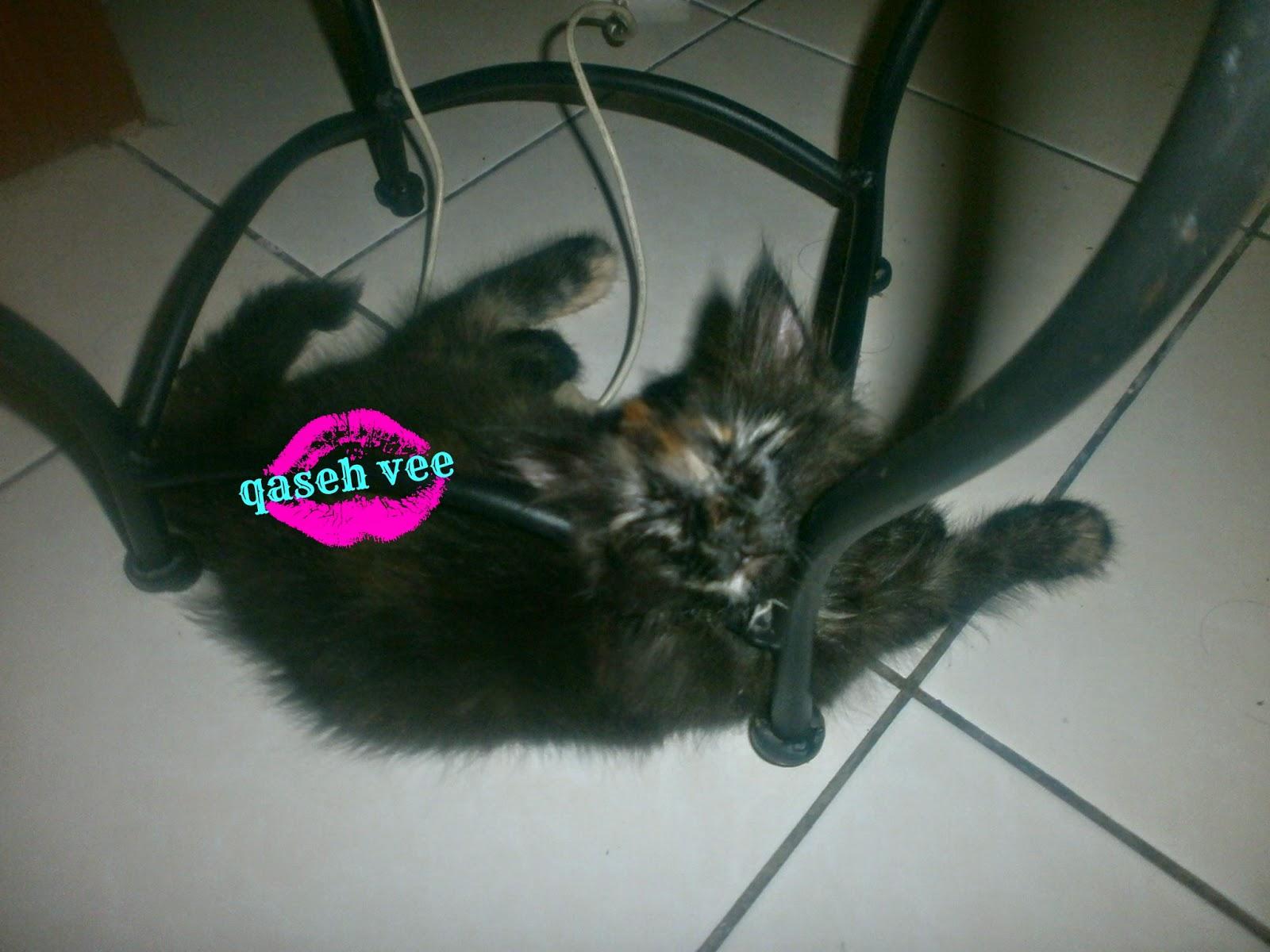 Kucing Bawa Rezeki