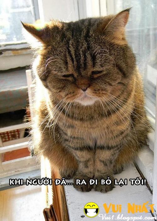 Mèo FA buồn bã