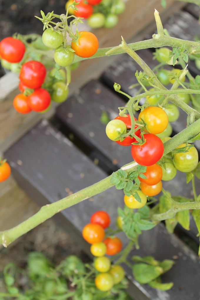 pieni kasvimaa, puutarha rivitalon pihalla
