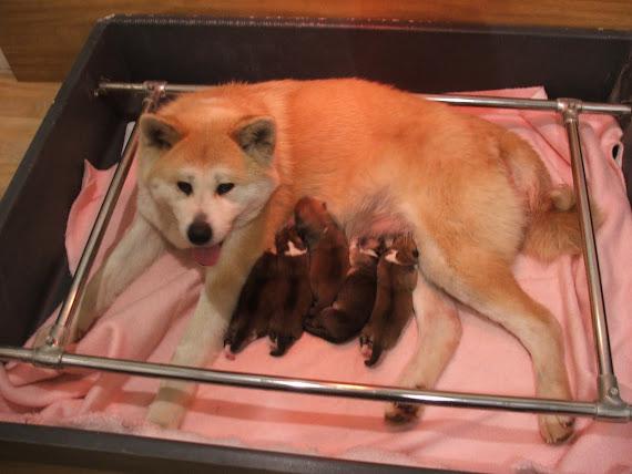 Emiko et ses bébés de quelques heures