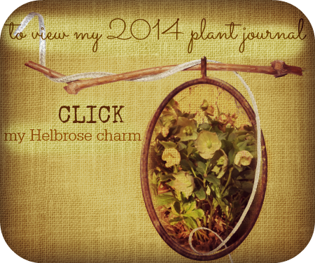 2014 Plant Journal
