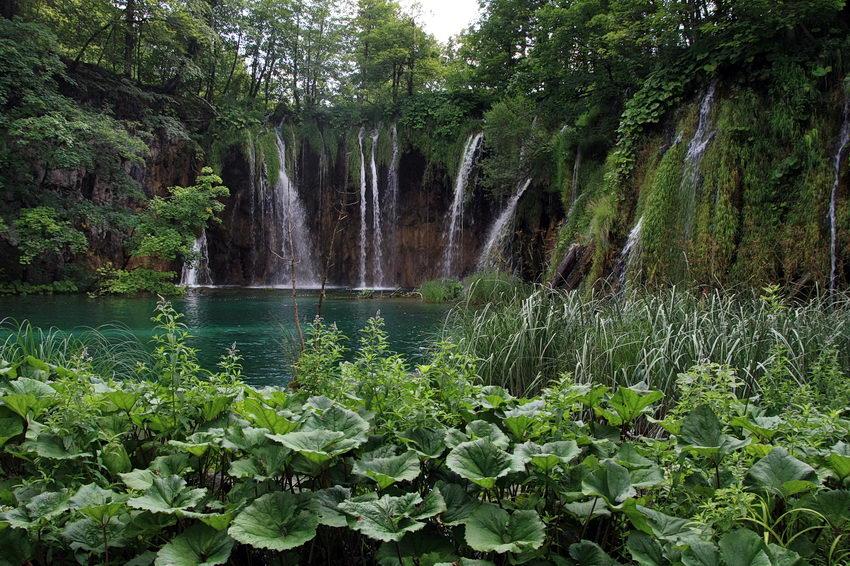 Quedas de água com plantas de folha larga em primeiro plano