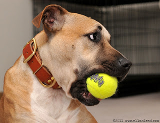 Ella's Lead dog Ophie