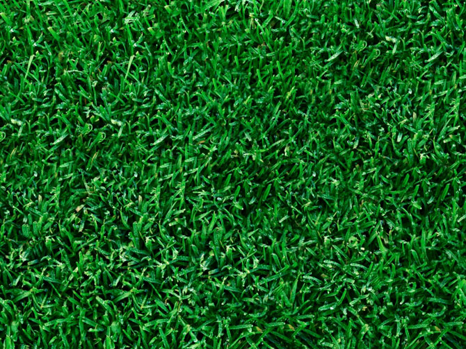 Top 28 type of grass for garden soil types and weeds how to tell which soil you have by - Grass lawn types make the right choice ...