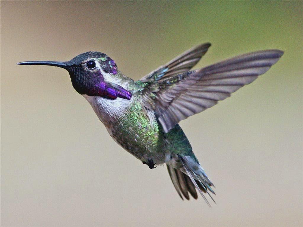 hình nền những chú chim dễ thương