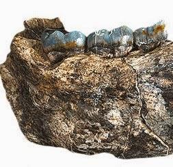 Mandíbula encontrada na África