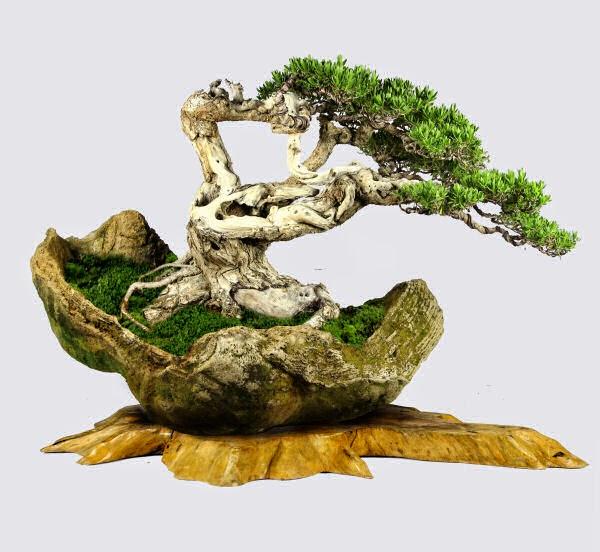 En frasco peque o ecosistema jos mar a merino - Como se cuida un bonsai ...