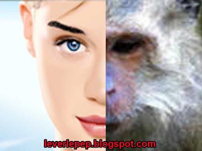 monkeys cosmetic mauritius