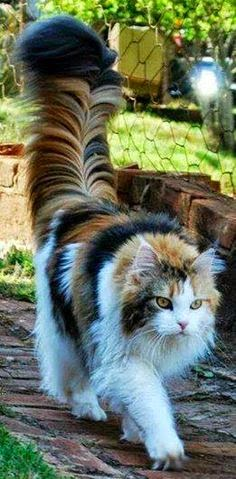 Beautiful and rare cat