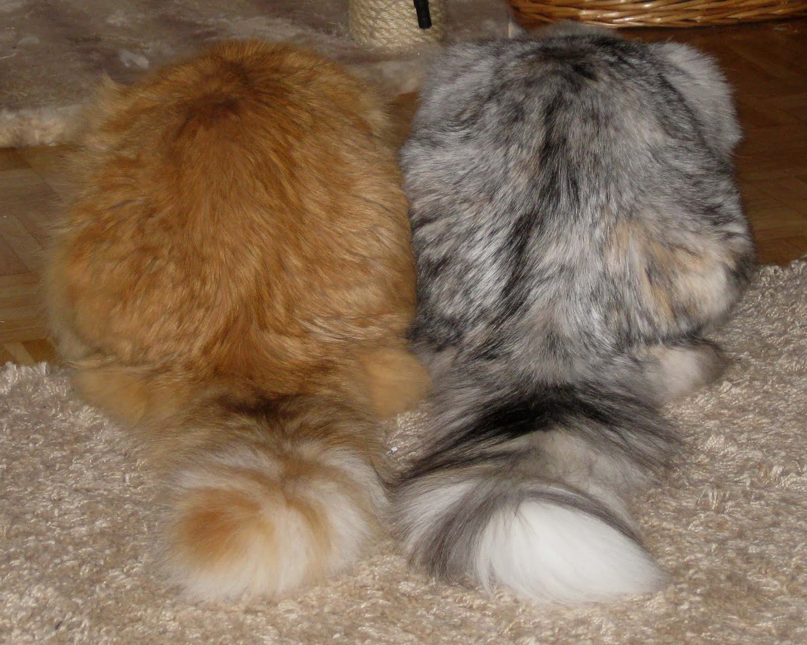 Yhteinen kissaäiti
