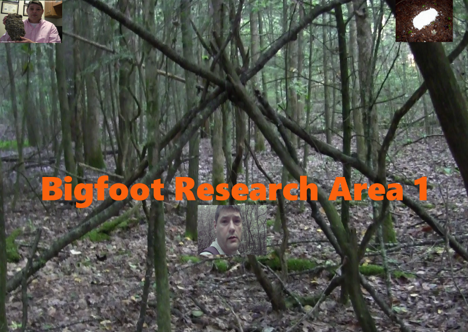 Bigfoot Research