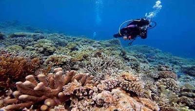 Biota Laut Pulau Kadidiri