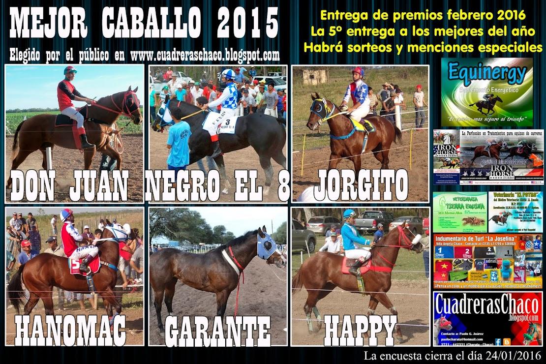 mejor caballo 2015 2-1-16
