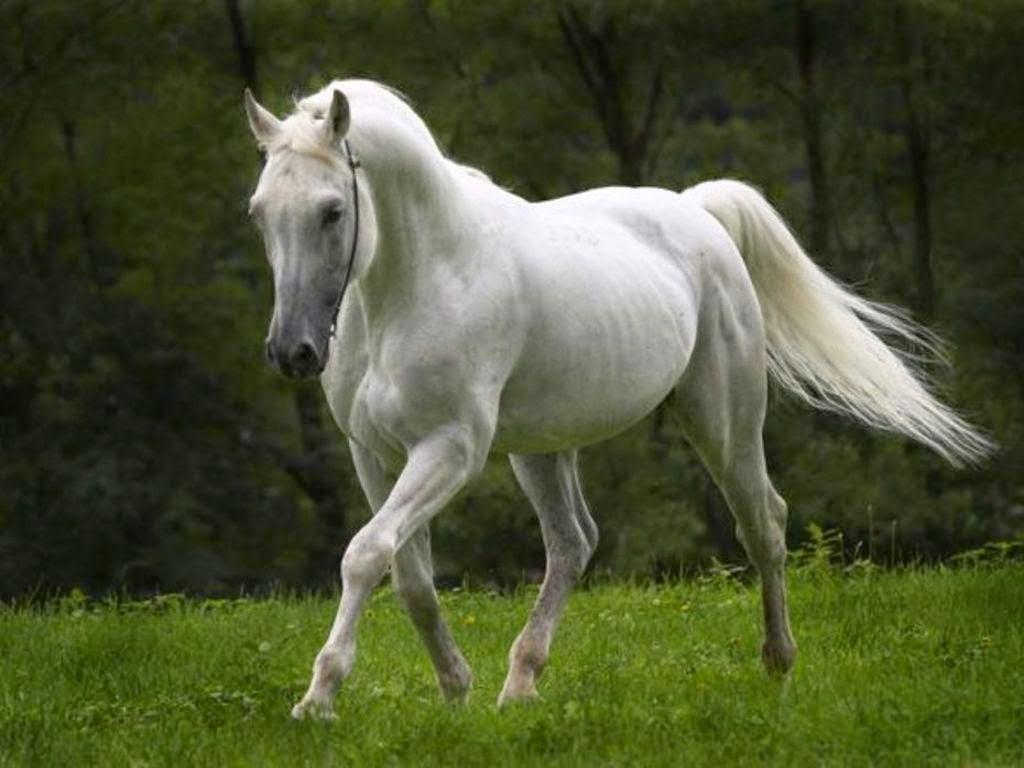 Wonderful   Wallpaper Horse Samsung Galaxy - Horse%2BHD%2BWallpapers%2B(14)  Perfect Image Reference_69532.jpg