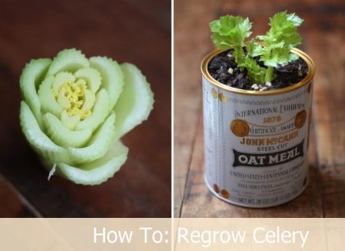 how to start celery seeds indoors