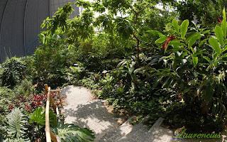Foto-Tropical-Islands-Resort_17
