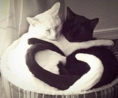 love cat-teman hidup