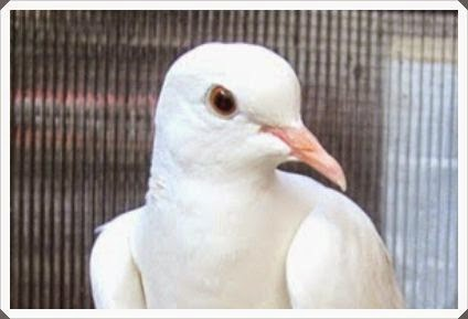 Jenis Burung Pemakan Biji-Bijian