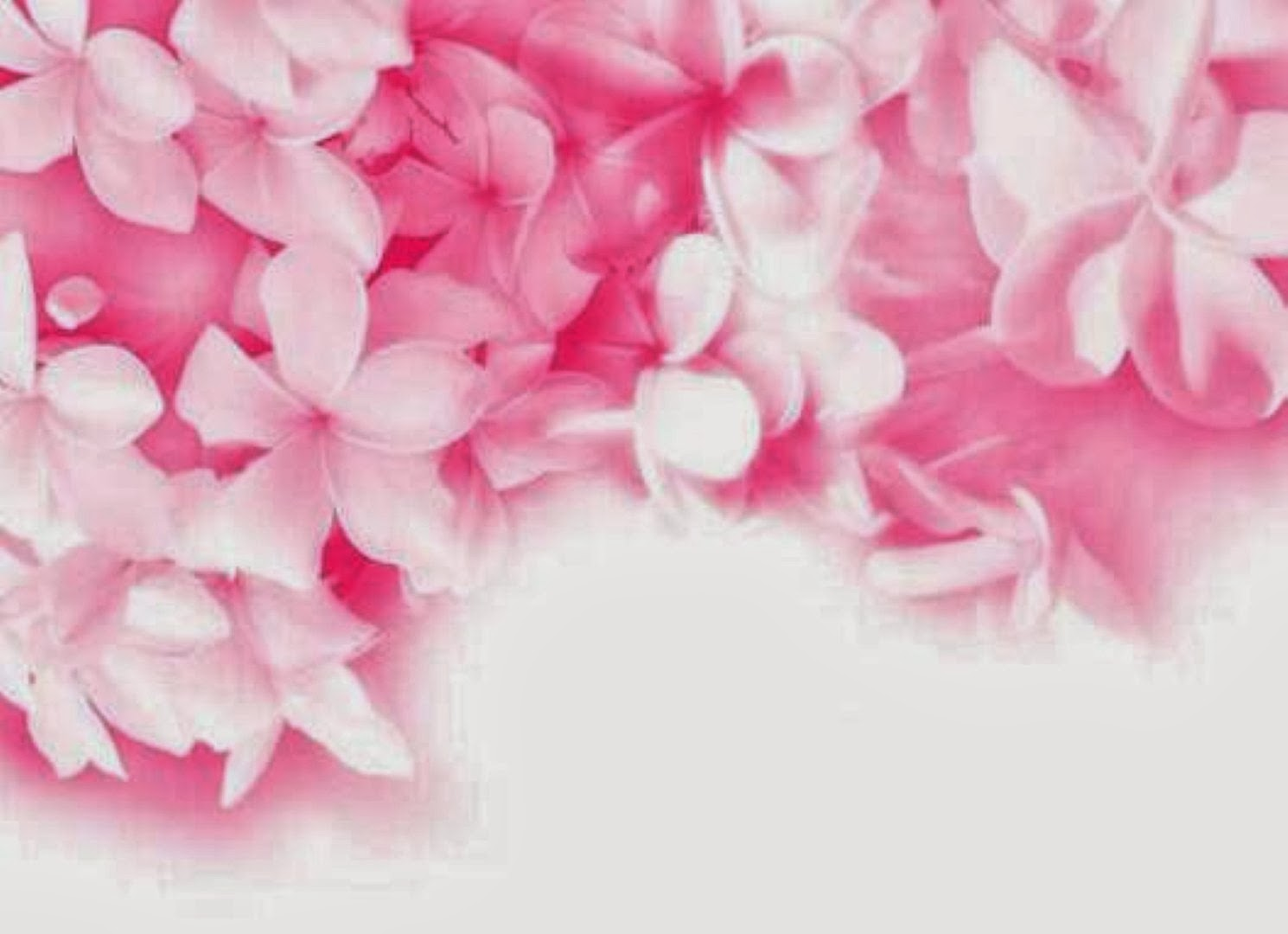 Images of hot pink flowers wallpaper spacehero hot pink flower background hd wallpapers mightylinksfo