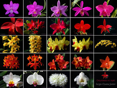 2 anos de Orquídeas no Apê
