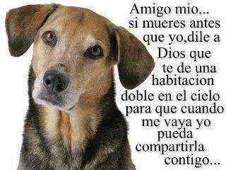 de Amistad de Perros con Bonito Mensaje - Imagenes con Frases, Fotos