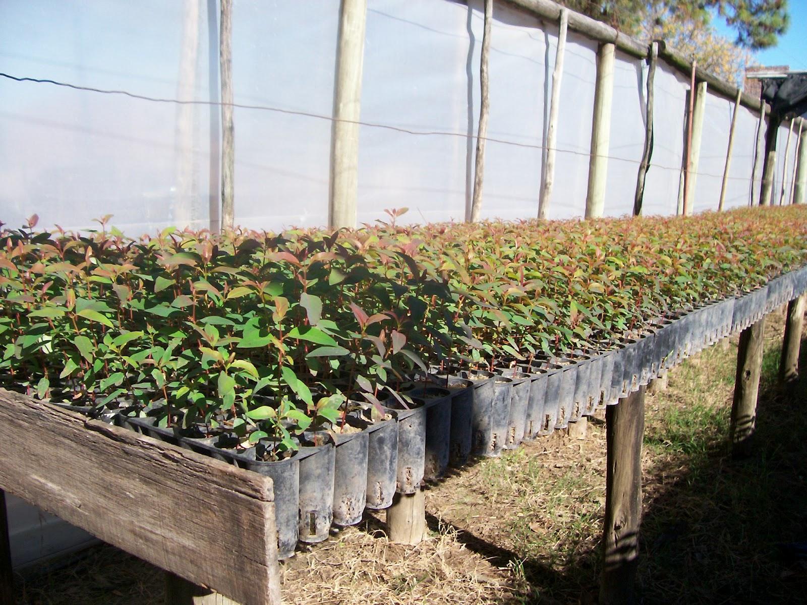 Entre r os forestal charla viveros forestales inta for Definicion de vivero