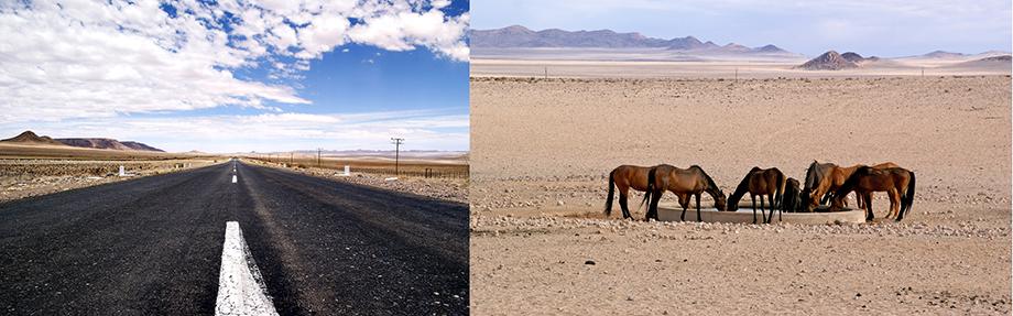 Ynas Reise Blog | Namibia | Pferde in der Wüste