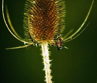 http://en.wikipedia.org/wiki/File:Butchbirdprey.jpg