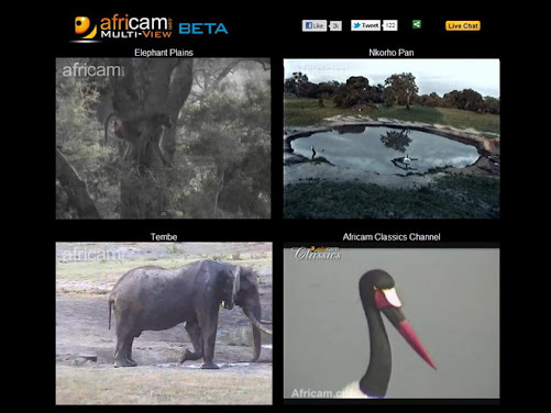 Africam... by Popular Demand