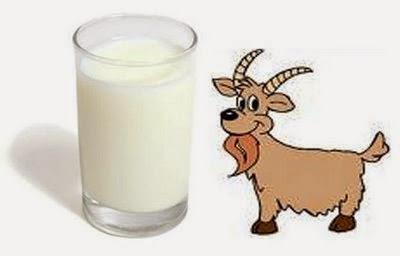 Susu Kambing Miliki Nutris Yang Tinggi