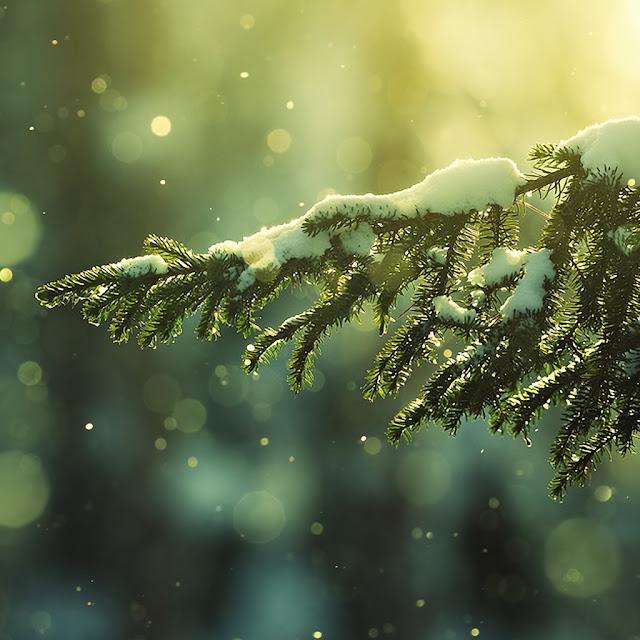 winter ipad wallpaper 4
