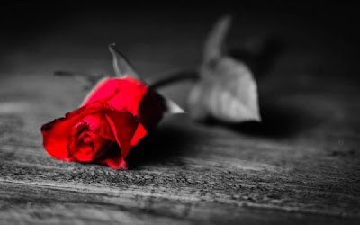 Priče.....  - Page 3 Red-rose-photography-plant-love-600x375