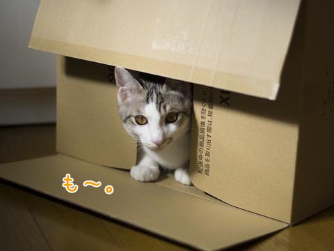 隠れていた子猫