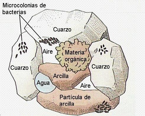El suelo formaci n de los suelos for Formacion de los suelos