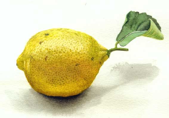 the lemon test and the u s The test for determining whether a law meets the requirements of the establishment clause is whether it has a legitimate secular purpose, does not have the primary.